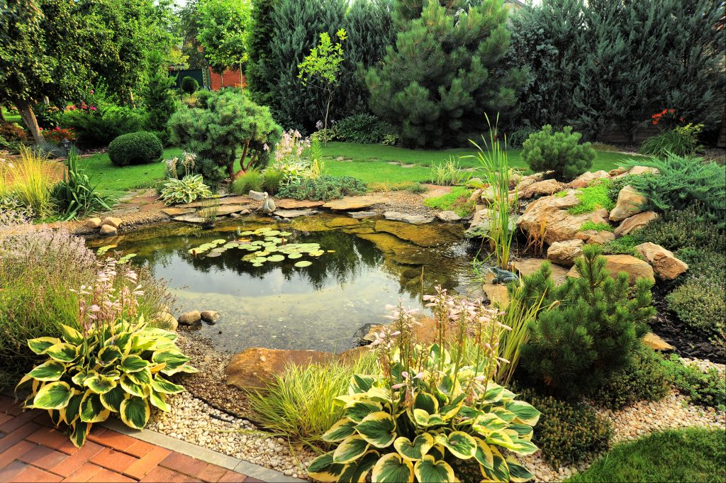 Backyard Sanctuary for Wildlife
